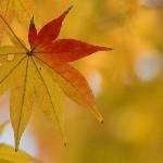 Cure détox automne