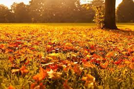 Cure d'automne et naturopathie