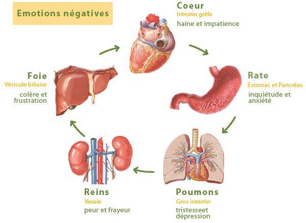 Effets des émotions sur les organes