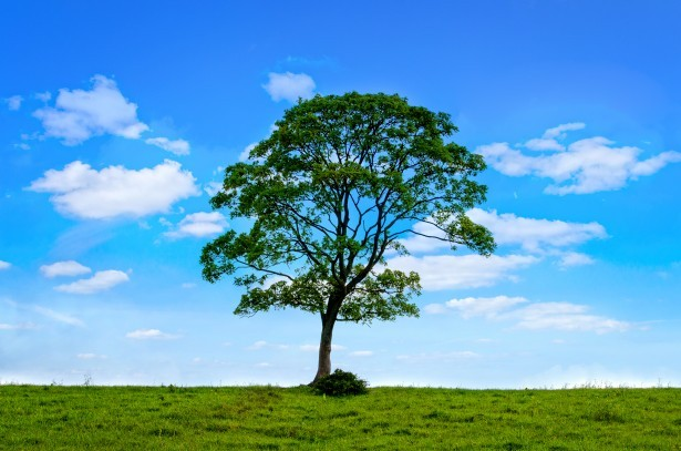 Mieux-être comme un arbre