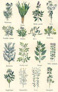 Formation phytothérapie-herboristerie avec Aurélie PERIN