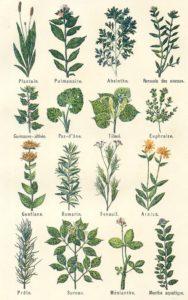 Phytothérapie herboristerie avec Aurélie PERIN